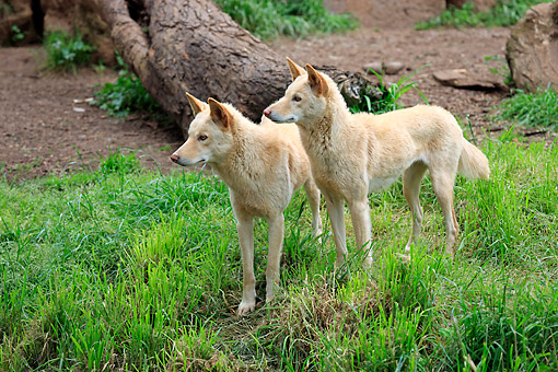 MAM 37 AC0005 01