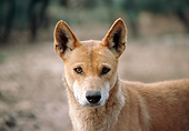 MAM 37 GL0001 01