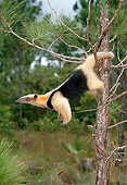 MAM 38 KH0001 01