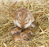 MAM 39 JE0001 01