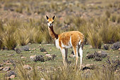 MAM 40 JE0001 01