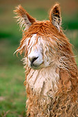 MAM 41 WF0001 01