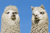 MAM 41 WF0002 01