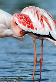 BRD 11 MH0022 01