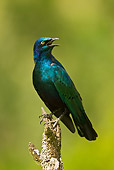 BRD 13 MC0036 01