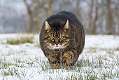 CAT 02 KH0359 01