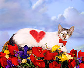 CAT 02 RK1458 01