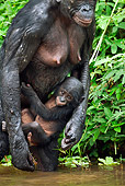 CHI 02 MH0013 01