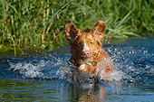 DOG 06 KH0040 01