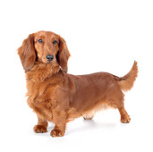 DOG 14 BK0022 01
