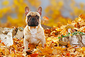 DOG 15 PE0016 01