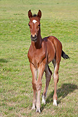 HOR 02 KH0048 01