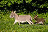 MAM 15 KH0102 01