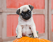 PUP 23 BK0007 01