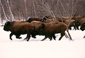 NOA 01 RK0001 11