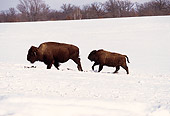 NOA 01 RK0008 03