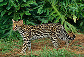OCE 01 TK0001 01