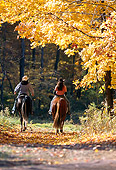 PEO 04 DS0004 01