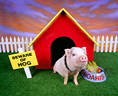 PIG 01 RK0031 25