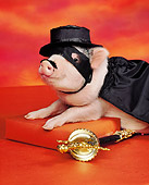 PIG 01 RK0118 10