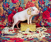 PIG 01 RK0154 02