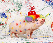 PIG 01 RK0156 11
