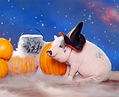 PIG 01 RK0163 20