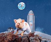 PIG 01 RK0191 15