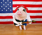 PIG 01 RK0202 12