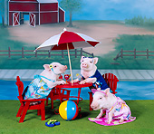 PIG 01 RK0219 01