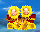 PIG 01 RK0002 08