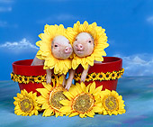 PIG 01 RK0002 11