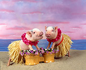 PIG 01 RK0007 13