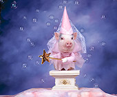 PIG 01 RK0034 03