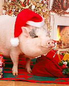 PIG 01 RK0048 10