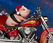 PIG 01 RK0049 09