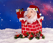 PIG 01 RK0085 14
