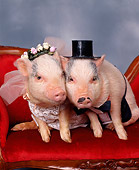 PIG 01 RK0104 04