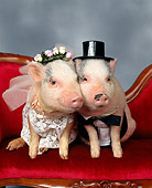 PIG 01 RK0104 05