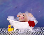 PIG 01 RK0133 25