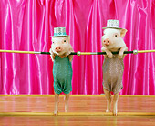 PIG 01 RK0198 14