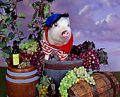 PIG 01 RK0235 02