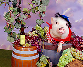 PIG 01 RK0235 13