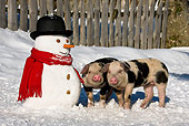 PIG 02 KH0023 01