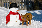 PIG 02 KH0024 01