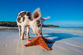 PIG 02 KH0043 01