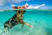 PIG 02 KH0045 01