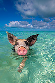 PIG 02 KH0056 01