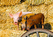 PIG 02 RK0046 23