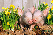 PIG 02 LS0001 01